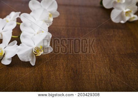 Orchid (phalaenopsis) On A  Wooden Table