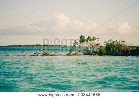 Vegetation With Palms, Laguna Bacalar, Chetumal, Quintana Roo, Mexico.