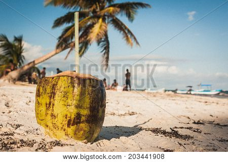 Coconut On The Beach At Playa Paraiso, Tulum, Quintana Roo, Mexico.