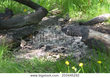 extinguished huge campfire of branches and whole trunks of oak in forest. Closeup poster