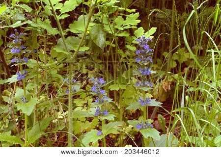 High Flowering Plant In The Dense Forest Grass