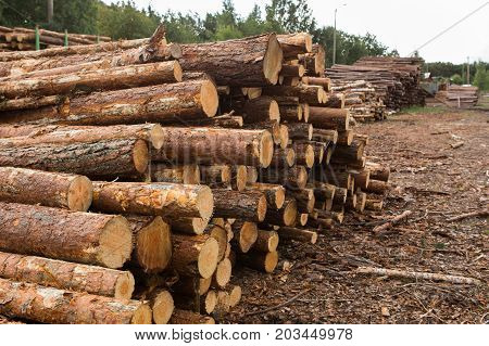 Stock of timber. Loading of timber on railroad cars.