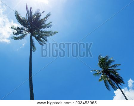 Tall palm tree silhouette on blue sky. Palm tree crown with green leaf on sunny sky background. Coco palm tree view from ground. Summer travel banner. Exotic island nature photo. Tropical nature image