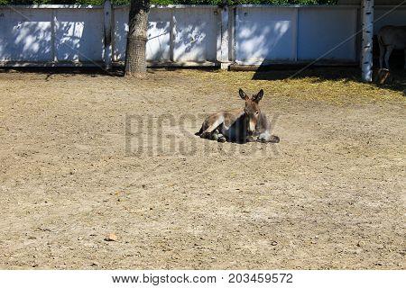Donkey In A Paddock