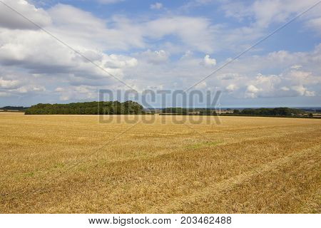 Wind Turbine And Stubble Field