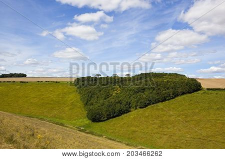 Triangular Woodland Copse