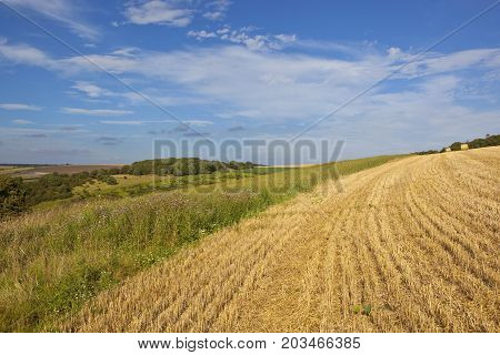 Wheat Stubble And Scenery