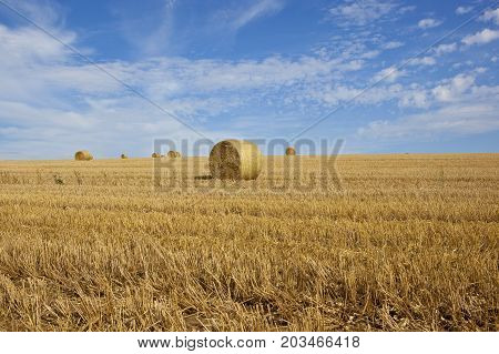 golden round straw bales in a wheat stubble field at harvest time in the yorkshire wolds under a blue summer sky