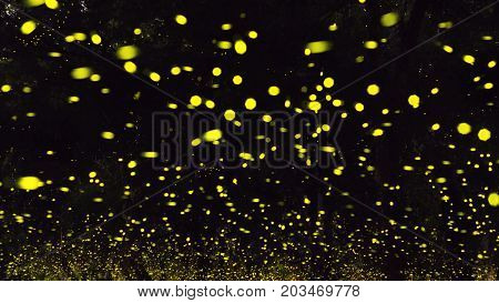 firefly flying at the forest in Thailand