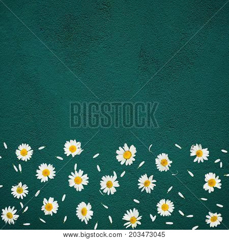 Beautiful background with flower daisy. Border of chamomile and petals scattered on the bottom Green texture. Top view. Flat lay. Decorative web banner. Frame square Image With Copy Space for text