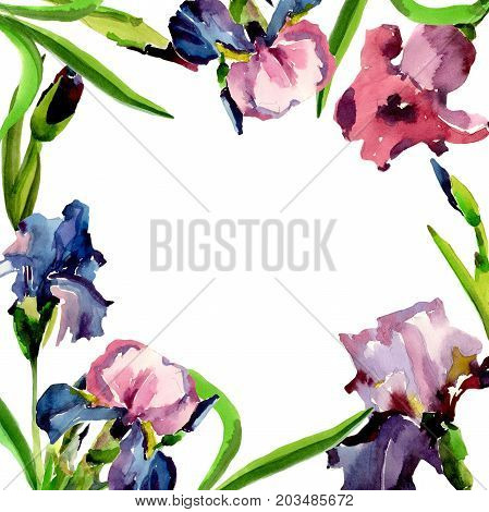 Wildflower iris flower frame in a watercolor style. Full name of the plant: flower-de-luce. Aquarelle wild flower for background, texture, wrapper pattern, frame or border.