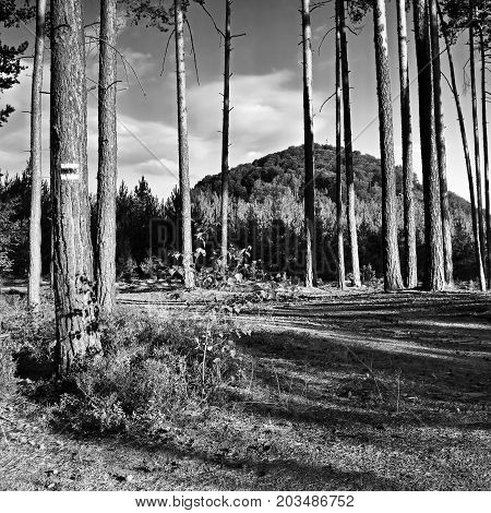 Hill Borny With Transmitter Seen From A Pine Forest In Macha's Land During Summer Holidays In Czech