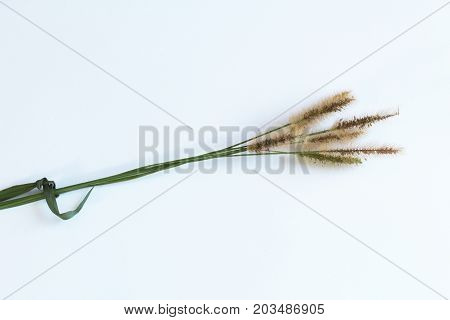 Grass seed heads tied together with a blade of grass, isolated on white