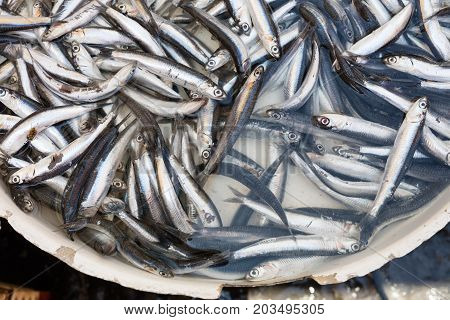 fish exposed in open market in Italy