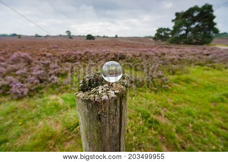 Creative photo shot with a glass ball reflecting the landscape. A Moorland on the Veluwe in Holland with purple flowering heath