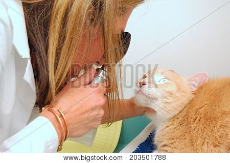 APRIL 20, 2009. SEATTLE, WA. Female veterinarian doing an exam on a cat inside her clinic.l