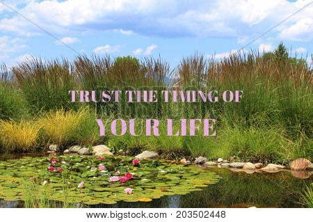 Inspirational conceptual view with pink text.Motivational words: Trust the timing of your life.Pond with floating lily pads and pink and red flowers.Tall ornamental grass and water reflections.
