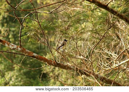 Small birds perched on a pine tree in the afternoon