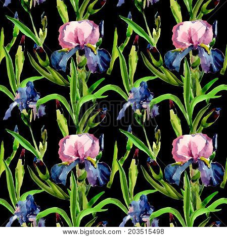 Wildflower iris flower pattern in a watercolor style. Full name of the plant: flower-de-luce. Aquarelle wild flower for background, texture, wrapper pattern, frame or border.