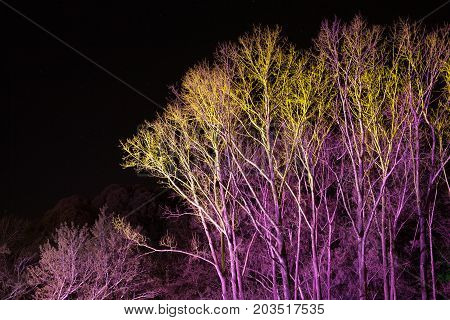 Trees Lit By Coloured Floodlights