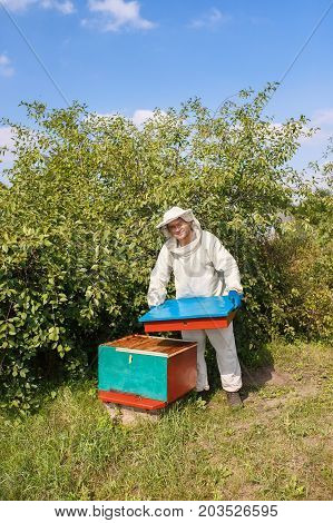 beekeeper opening hive. Beekeeper in protective workwear inspecting honeycomb frame at apiary. Beekeeping concept