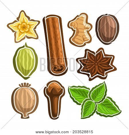 Vector Set icons for culinary Spices: 9 minimal labels of indian condiments isolated on white background, set of cartoon simple stickers for spice packing, tags for aroma seasoning graphic pictograms.