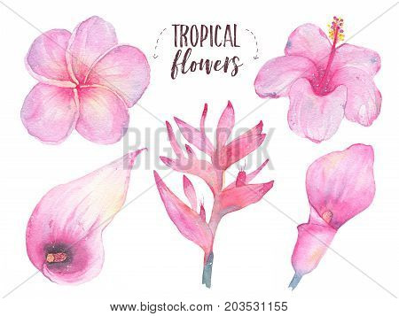 Watercolor hand painted tropical flower frangipani hibiscus calla lily set isolated on white background. Floral illustration. Botanical art