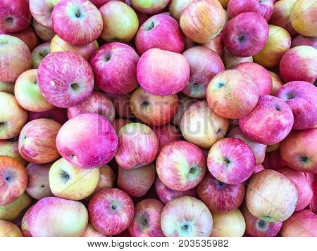 Pile of colorful organic apples for background