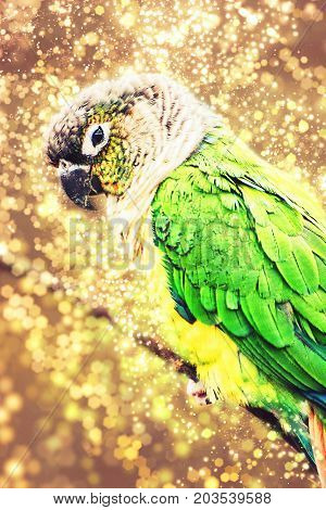 Beautiful colorful parrot with shimmering background. Beauty in nature.