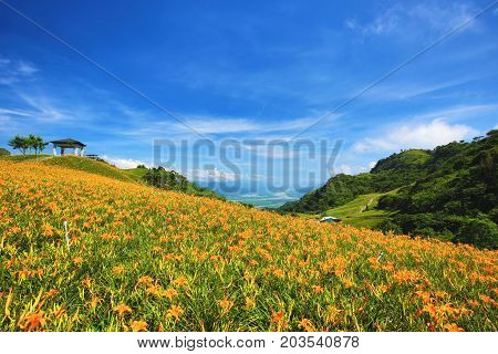 Beautiful scenery of daylily flowers with pavilion and mountains in a sunny day
