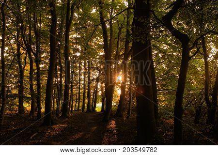 Twilight Sunset in the gloomy autumn forest
