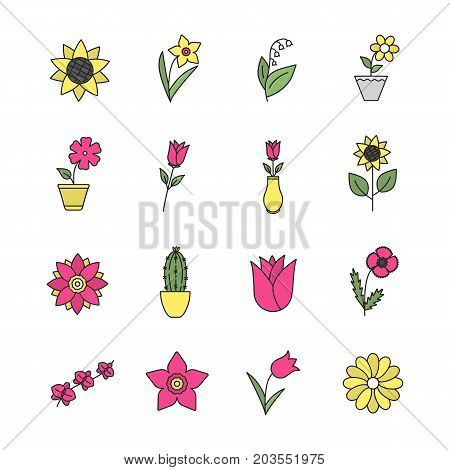 Flowers color icon. Garden, wild, house plants. Blooming decorative flowers. Isolated vector illustration