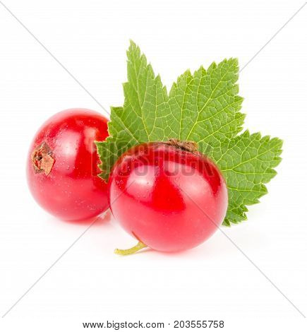 Red currant berry with leaf isolated on white background macro.