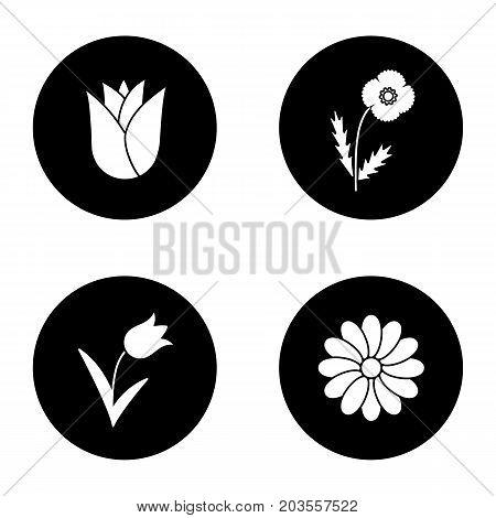 Flowers glyph icons set. Rosebud, poppy, tulip, chamomile. Vector white silhouettes illustrations in black circles