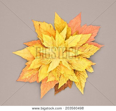 Fall Leaves Background. Autumn Fashion Design. Yellow Fall Leaves on Gray. Trendy fashion Stylish Concept. Autumn Vintage