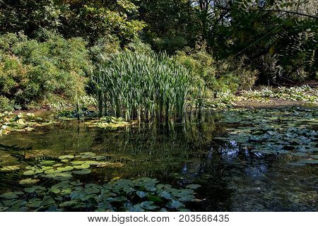 Marshland covered with lilies and reeds round the thickets of shrubs and trees.