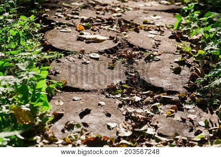 Wood stump, garden decoration, landscape design. Path made of old wooden stumps, close-up, selective focus