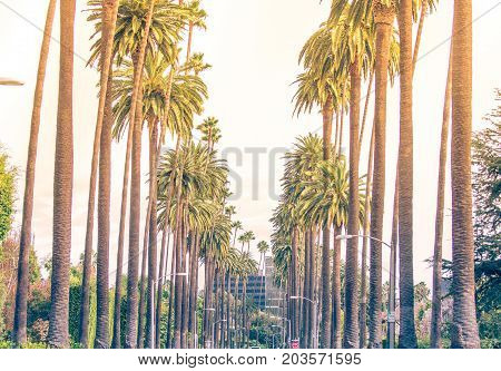 Palm trees in Los angeles, Beverly hills