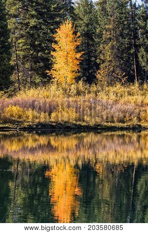a scenic autumn landscape reflection in the Wyoming