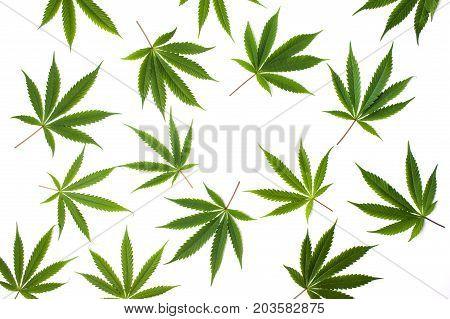Marijuana Leafs On White Background Isolated