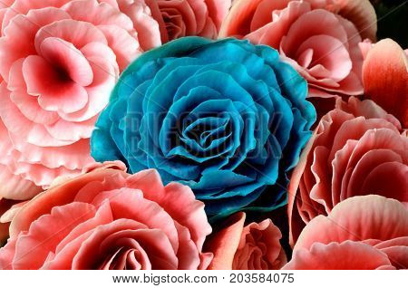 Flower Background, Blue And Pink Begonias,