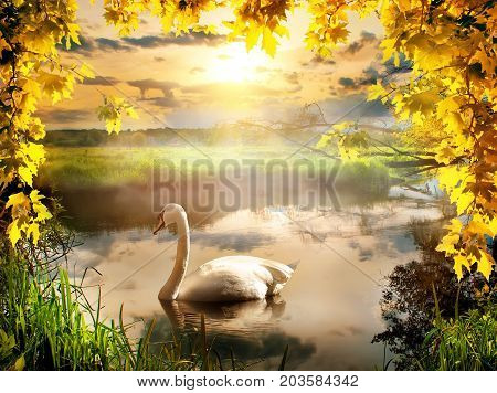 Swan on river at tranquil autumn morning