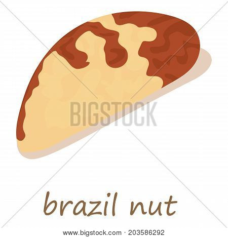 Brazil nut icon. Isometric illustration of brazil nut vector icon for web