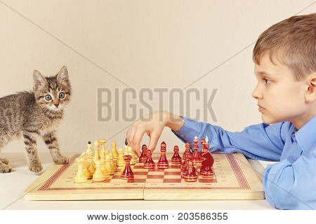 Little grandmaster with a kitten plays chess.