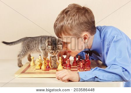 Beginner grandmaster with a tabby kitten plays chess.