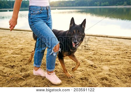 A woman is walking with a German shepherd on the shore of the lake in the summer.
