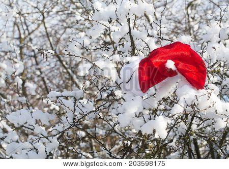 Santa Red Hat On Snowy Branch