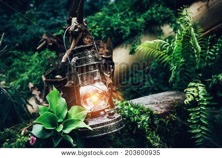 Vintage kerosene oil lantern lamp burning with soft warm light among green plants in wood and forest, travel explore concept