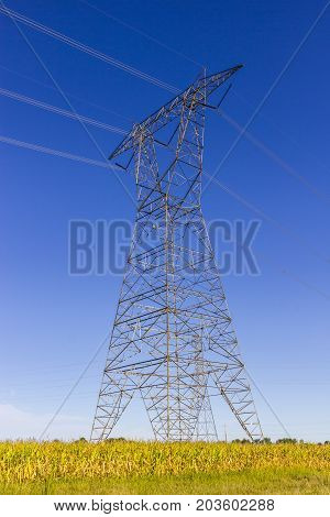 High-voltage power lines and pylon against blue sky and corn field