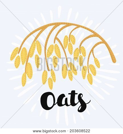 Vector cartoon funny stylizes illustration of spikelet of oat on the white in vintage style.